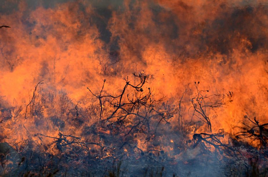 fynbos inferno