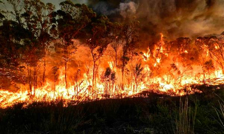 landowner tips_using controlled burning as tool